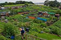 Allotments in Westerham