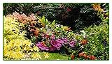 Charts Edge Gardens