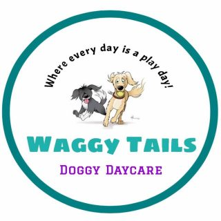 Waggy Tails Doggy Daycare